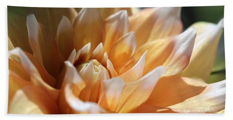 Mccombie Hand Towel featuring the photograph Dahlia Named Seattle by J McCombie