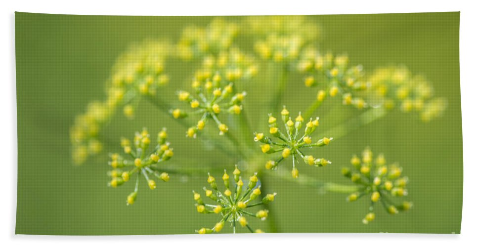 Yellow Dill Flower Bath Sheet featuring the photograph Yellow Dill Flower by Iris Richardson