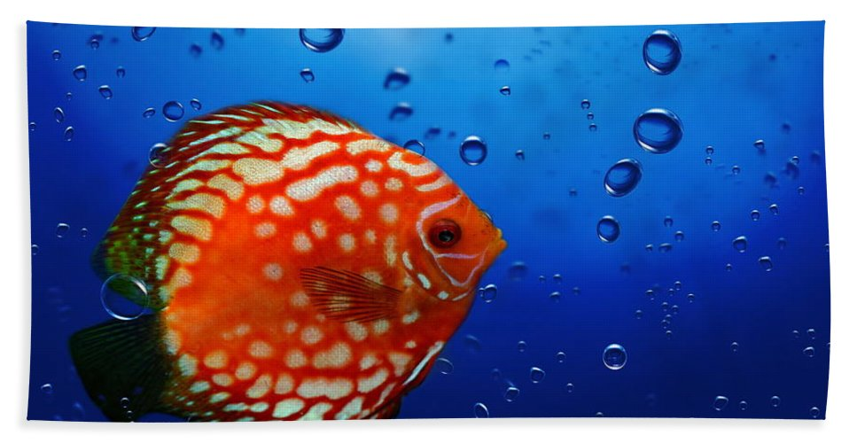 Fish Bath Sheet featuring the photograph Discus Fish by Heike Hultsch