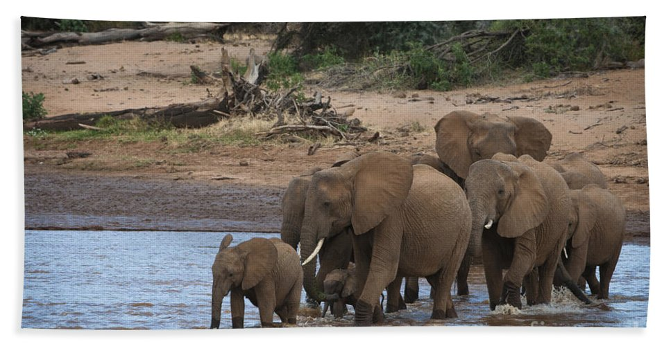 Africa Bath Sheet featuring the photograph Elephants Crossing The River by John Shaw