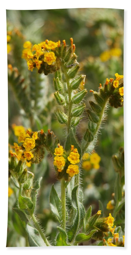 Wildflowers Hand Towel featuring the photograph Fiddleneck Flowers by Howard Stapleton