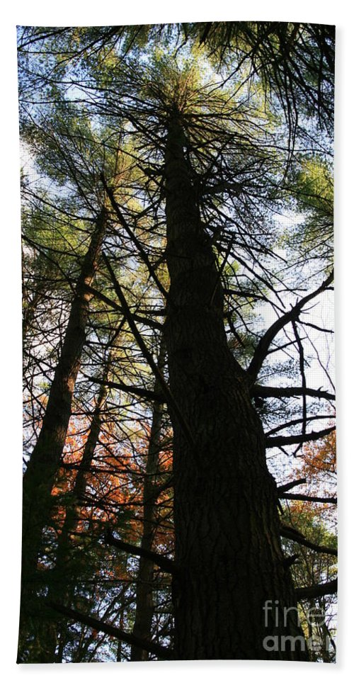 Tree Bath Sheet featuring the photograph From Below by Neal Eslinger