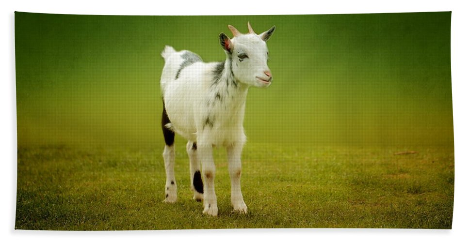 Animal Bath Sheet featuring the photograph Goat by Heike Hultsch