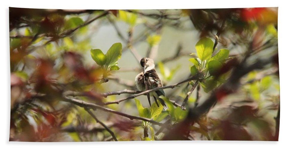 Mccombie Bath Sheet featuring the photograph Hummingbird In Spring by J McCombie
