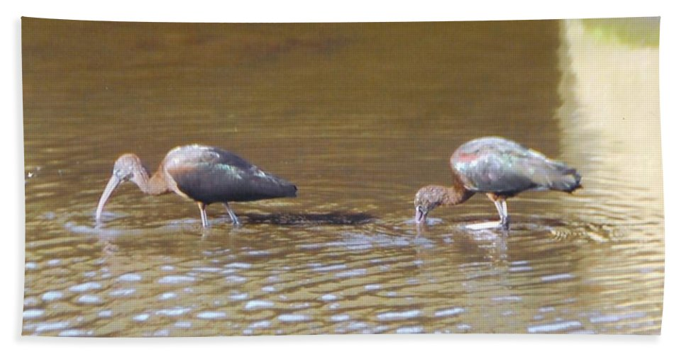 Feeding In Ditch Bath Sheet featuring the photograph Ibis by Robert Floyd
