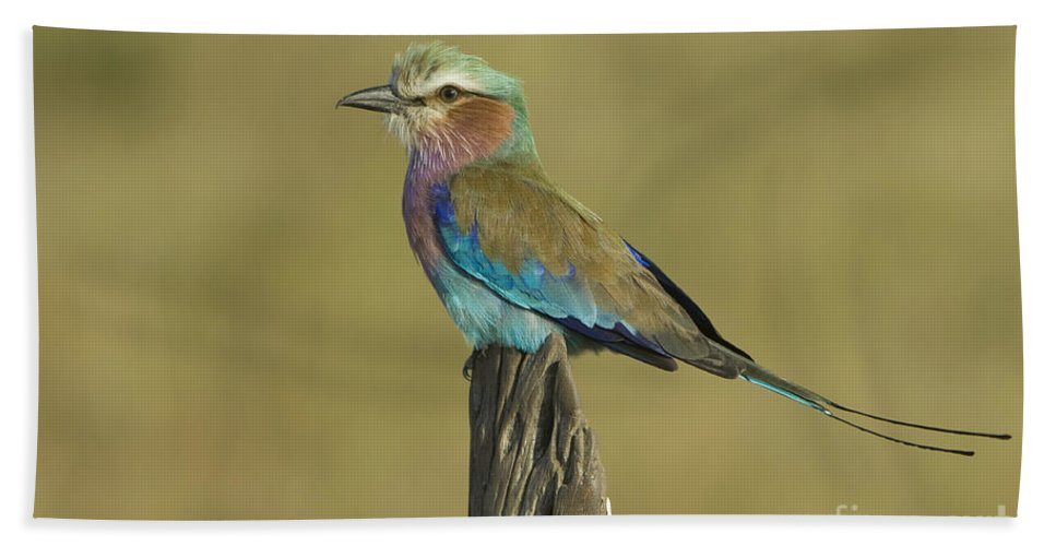 African Fauna Bath Towel featuring the photograph Lilac-breasted Roller by John Shaw