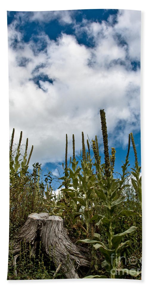 Landscape Photography Hand Towel featuring the photograph Looking Up by Cheryl Baxter