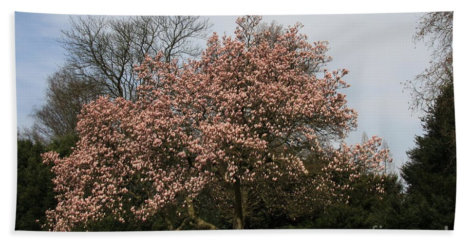 Magnolia Tree Hand Towel featuring the photograph Magnolia Tree by Christiane Schulze Art And Photography