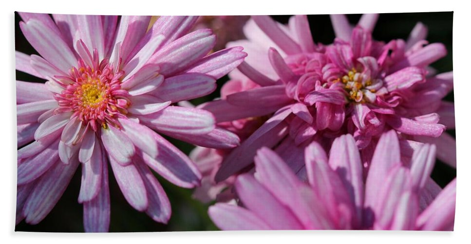 Mccombie Hand Towel featuring the photograph Marguerite Daisy Named Double Pink by J McCombie