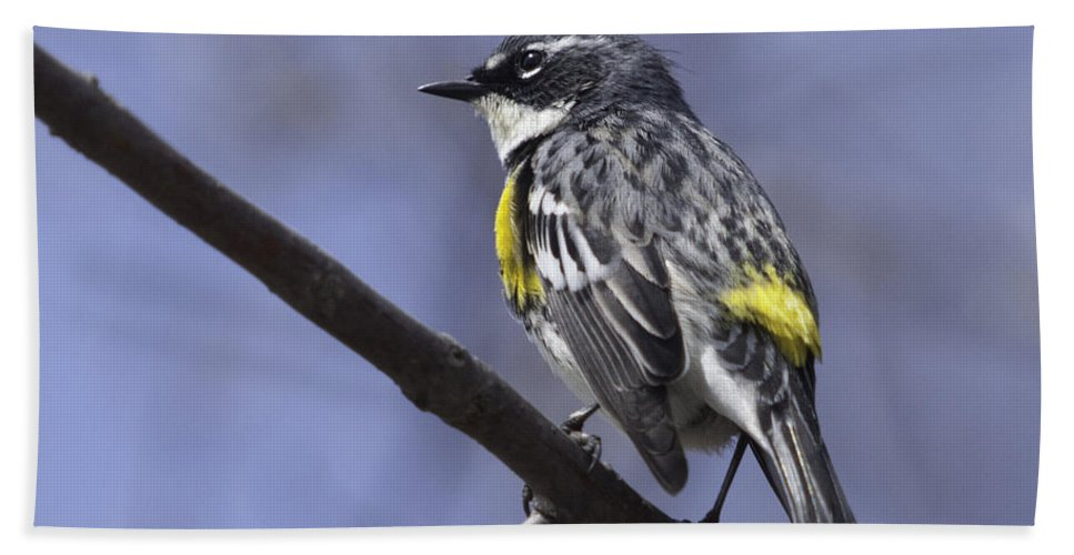 Myrtle Warbler Hand Towel featuring the photograph Myrtle Warbler by Ronald Grogan