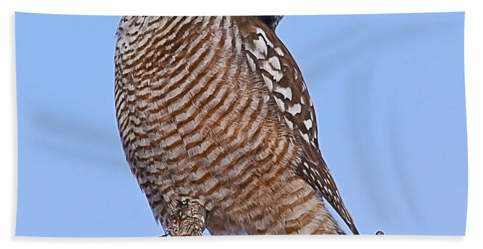 Northern Hawk Owl Bath Sheet featuring the photograph Northern Hawk Owl by John Vose