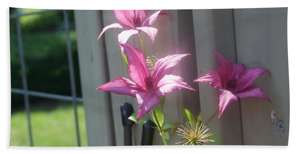 Pink Bath Sheet featuring the photograph 3 Of A Kind  # by Rob Luzier