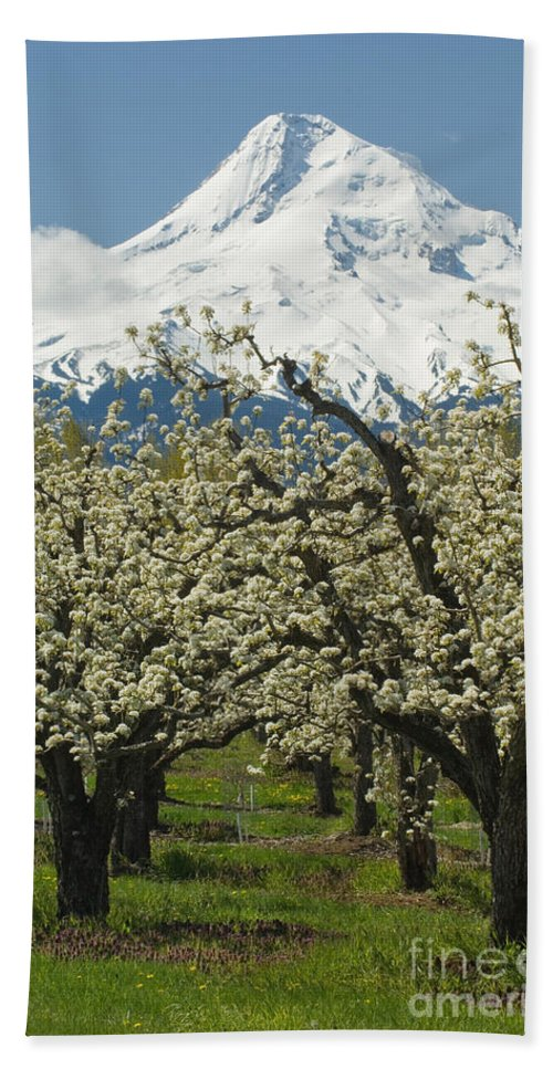 Orchard Bath Sheet featuring the photograph Orchard And Mount Hood, Oregon by John Shaw