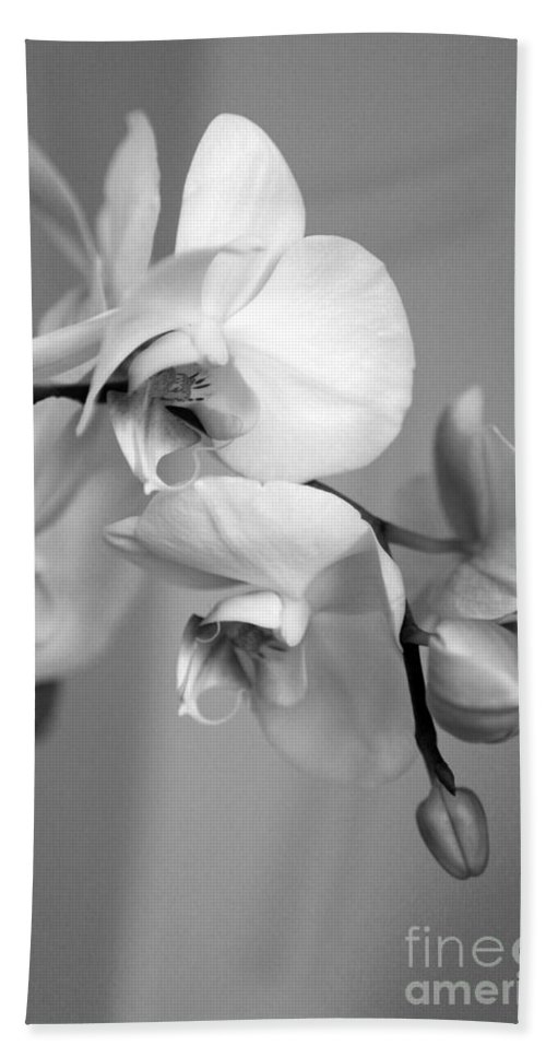 Orchids Hand Towel featuring the photograph Orchid by Amanda Barcon