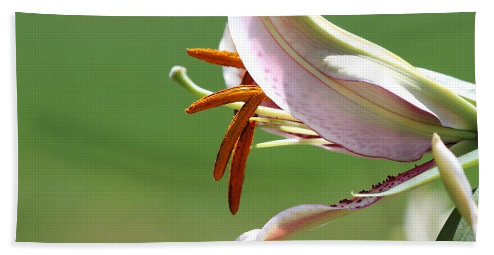 Mccombie Hand Towel featuring the photograph Oriental Lily Named Tiger Edition by J McCombie