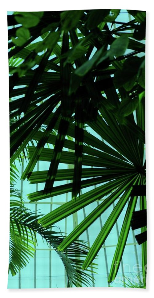 Palm Hand Towel featuring the photograph Palm Trees by Kathleen Struckle