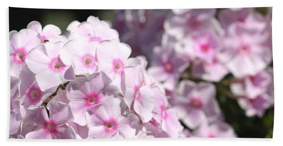 Mccombie Bath Towel featuring the photograph Phlox Paniculata Named Bright Eyes by J McCombie