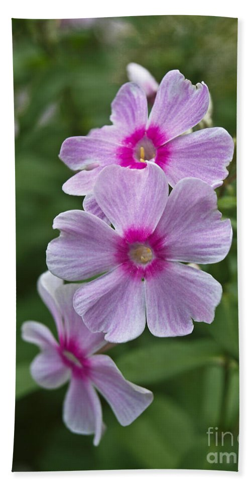 America Hand Towel featuring the photograph Pink Wood-sorrel by Howard Stapleton