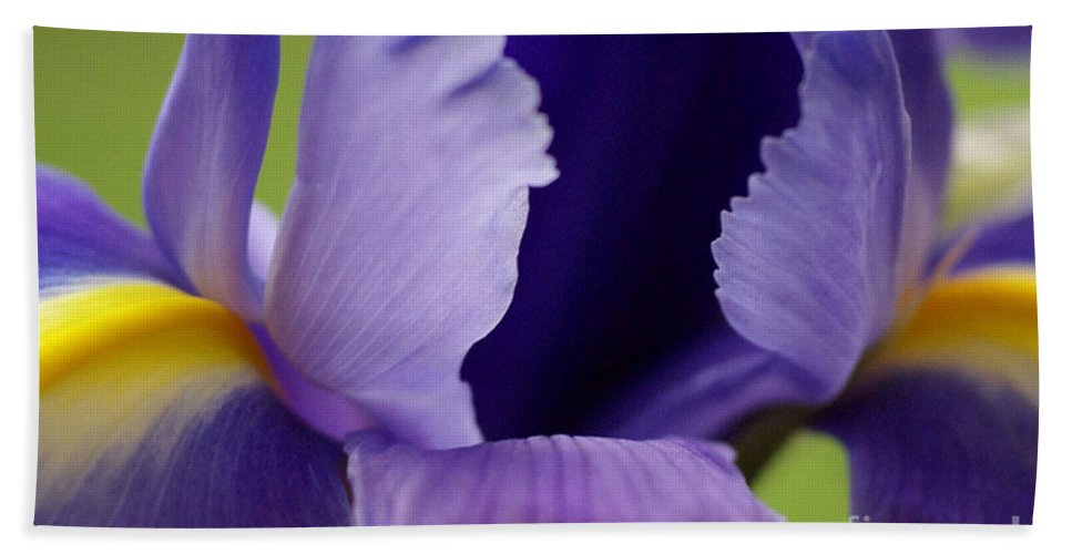 Purple Hand Towel featuring the photograph Purple by Carol Lynch