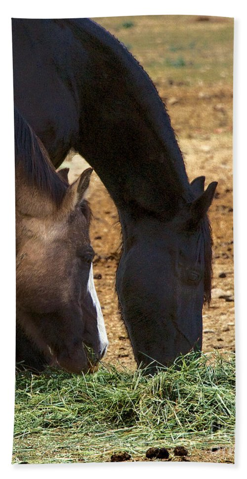 Rancho Oso Bath Sheet featuring the photograph Rancho Oso - California by Yefim Bam