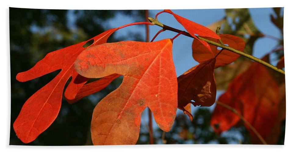 Leaf Bath Sheet featuring the photograph Red Autumn by Neal Eslinger