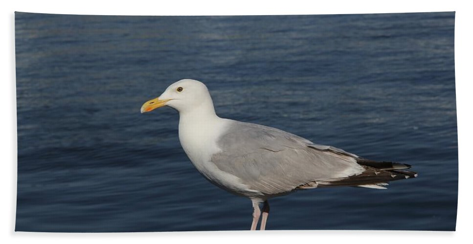 Seagull Hand Towel featuring the photograph Seagull by FL collection