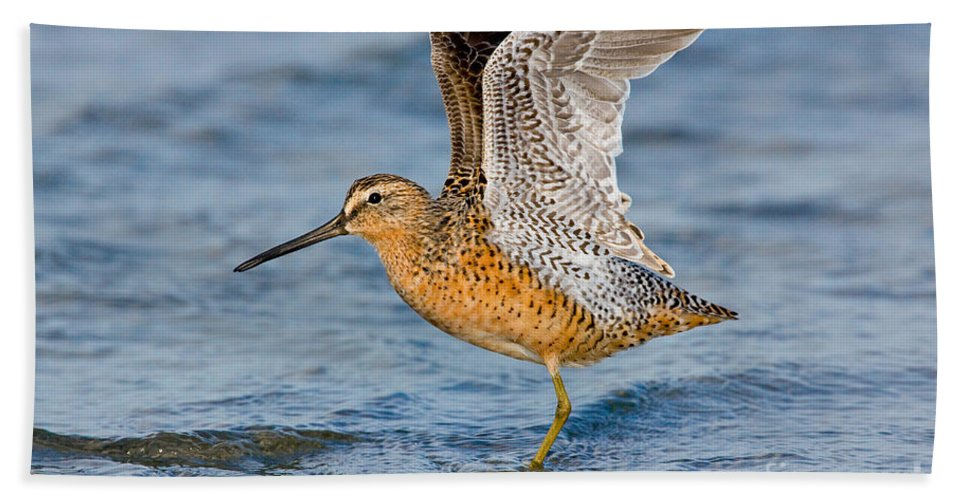 Short-billed Dowitcher Hand Towel featuring the photograph Short-billed Dowitcher by Anthony Mercieca