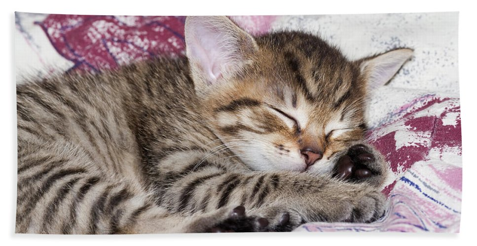 Adorable Hand Towel featuring the photograph Sleeping Kitten by Michal Boubin