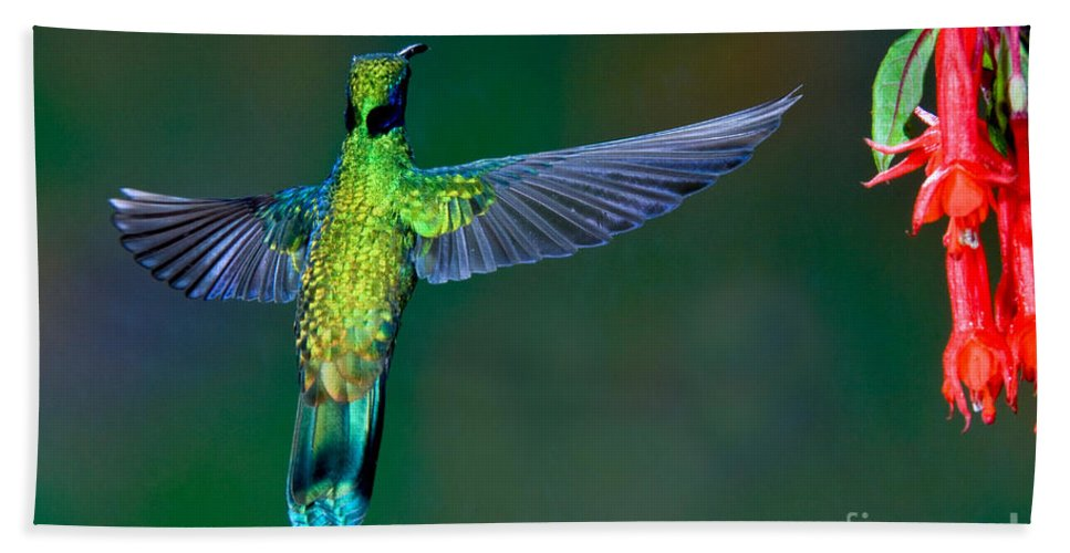 Animal Hand Towel featuring the photograph Sparkling Violetear by Anthony Mercieca
