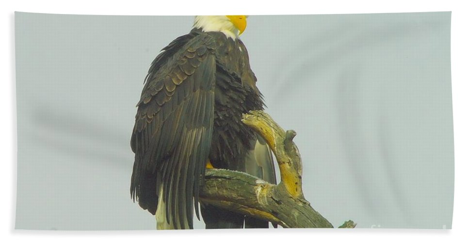 Eagles Bath Sheet featuring the photograph Stretching The Wings by Jeff Swan