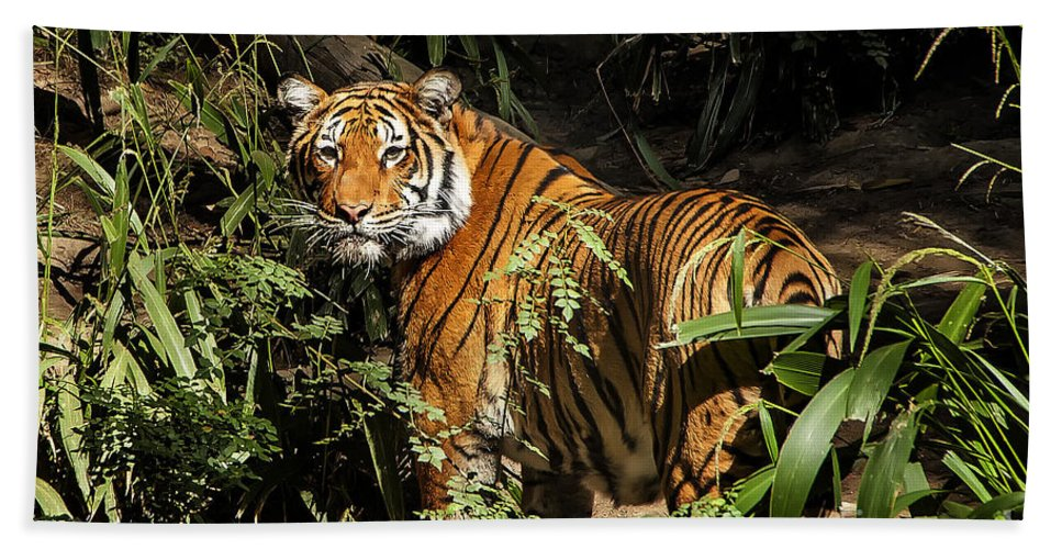 Tiger Hand Towel featuring the photograph Tiger by Jon Berghoff