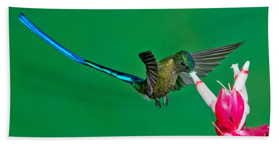 Violet-tailed Sylph Hand Towel featuring the photograph Violet-tailed Sylph by Anthony Mercieca