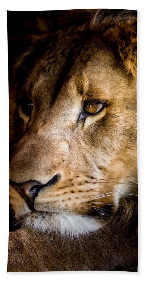 Lion Hand Towel featuring the photograph Waiting by Ernie Echols