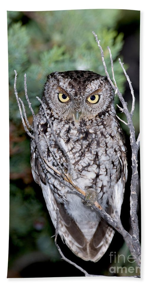 Megascops Trichopsis Hand Towel featuring the photograph Whiskered Screech Owl by Anthony Mercieca