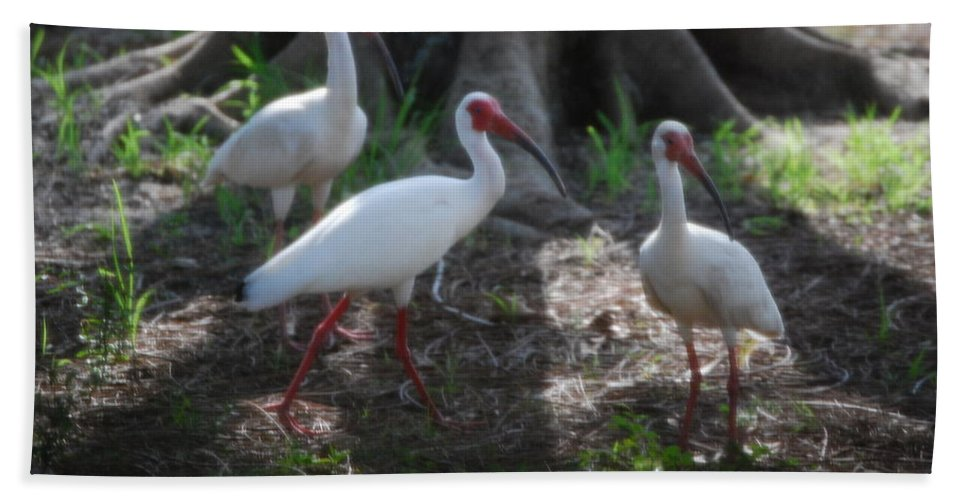 What's That?there's That Cat Again.suncoast Exterminators. Florida Hand Towel featuring the photograph White Ibis by Robert Floyd