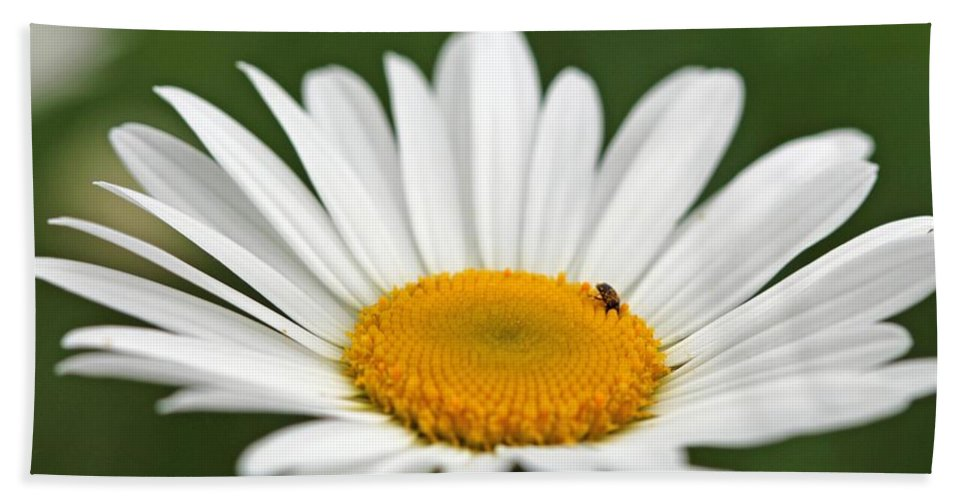 Mccombie Bath Sheet featuring the photograph Wildflower Named Oxeye Daisy by J McCombie