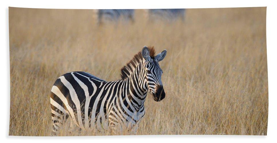 Africa Bath Sheet featuring the photograph Zebra by John Shaw