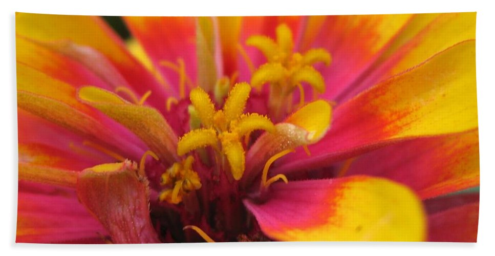 Mccombie Bath Sheet featuring the photograph Zinnia Named Swizzle Scarlet And Yellow by J McCombie