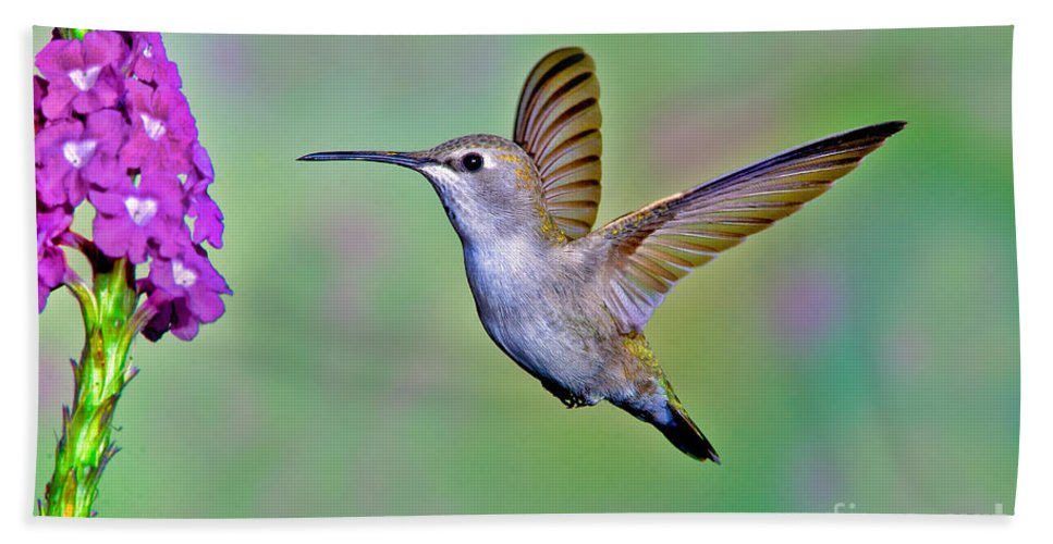 Animal Hand Towel featuring the photograph Annas Hummingbird by Anthony Mercieca