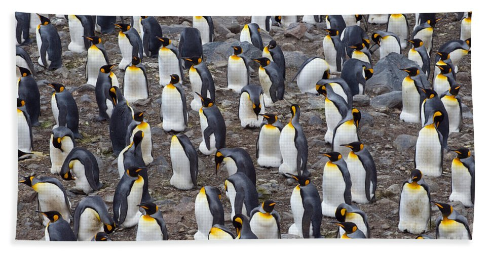 Animal Bath Sheet featuring the photograph King Penguins by John Shaw