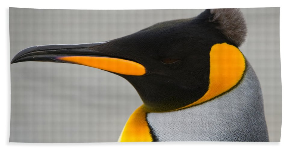 Animal Bath Sheet featuring the photograph King Penguin by John Shaw