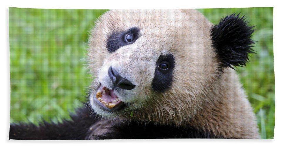 Ailuropoda Melanoleuca Bath Sheet featuring the photograph Giant Panda by John Shaw