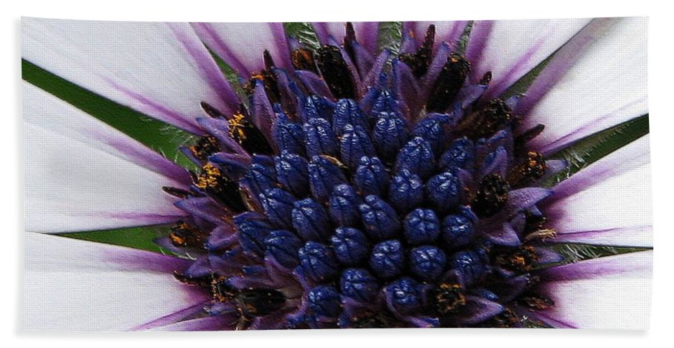 Osteospermum Bath Sheet featuring the photograph African Daisy Named Soprano White by J McCombie