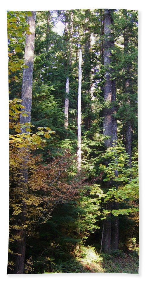 Bloom Hand Towel featuring the photograph Autumn 8 by J D Owen