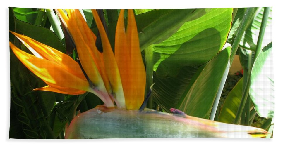 Bird Of Paradise Bath Sheet featuring the photograph Bird Of Paradise by Christiane Schulze Art And Photography
