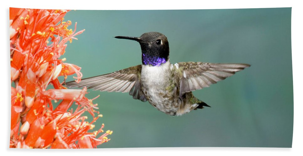 Fauna Hand Towel featuring the photograph Black-chinned Hummingbird by Anthony Mercieca