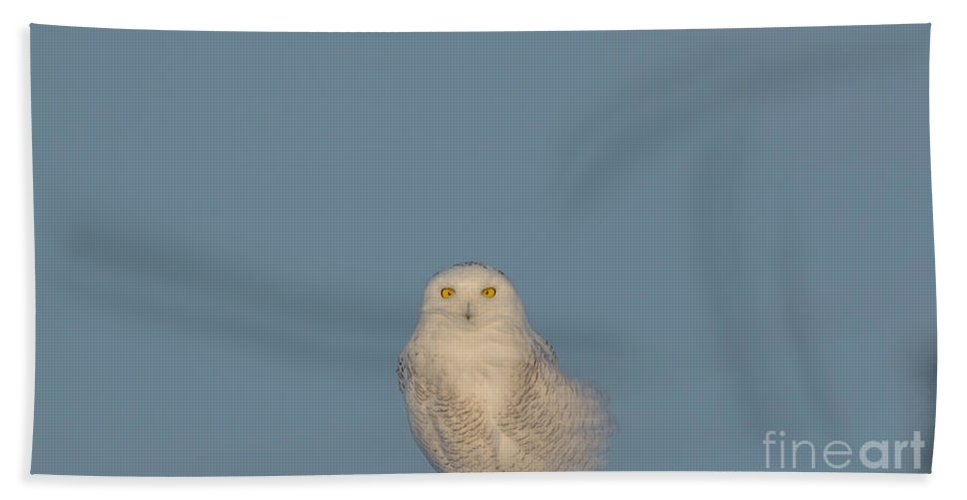 Blue Sky Hand Towel featuring the photograph Bright Eyes by Cheryl Baxter