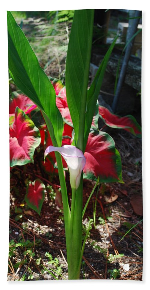 Growing In My Yard Bath Sheet featuring the photograph Canna Lily by Robert Floyd