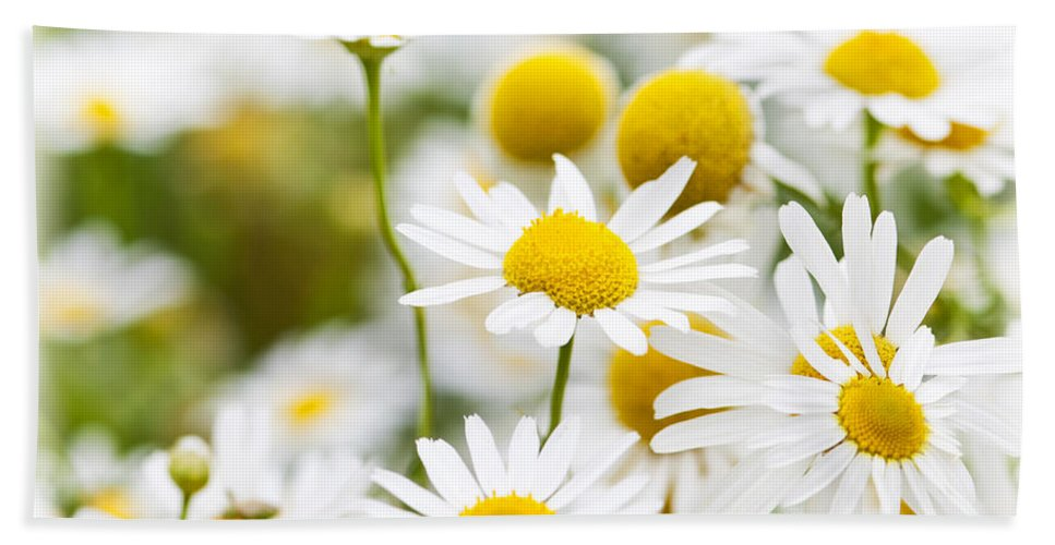 Chamomile Bath Towel featuring the photograph Chamomile Flowers by Elena Elisseeva