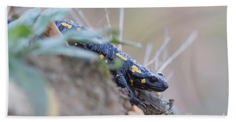 Animals Hand Towel featuring the photograph Fire Salamander - Salamandra Salamandra by Jivko Nakev